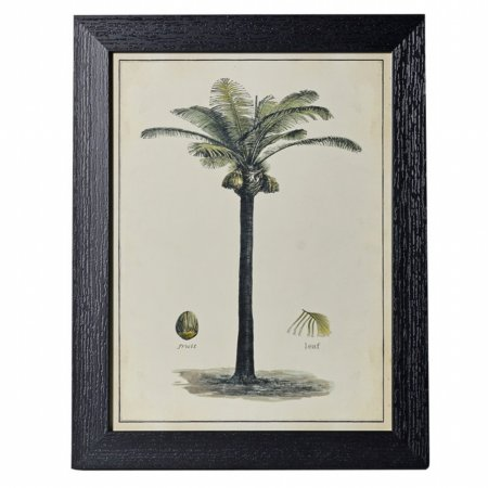 14654/Vale-Furnishers/Coconut-Palm-Print-in-Black-Frame