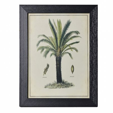 14655/Vale-Furnishers/Date-Palm-Print-in-Black-Frame